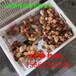 紅玉雞苗紅玉公雞苗價格大型孵化場育雛成活率高