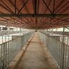 豬場豬舍育肥專用全自動喂料機養豬自動化料線及配件