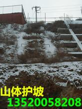 供应北京怀柔区绿化工程,边坡绿化施工