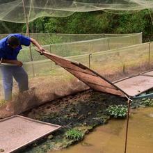 青蛙养殖怎么样?青蛙养殖效益如何图片