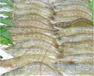 對蝦養殖管理對蝦養殖怎么樣