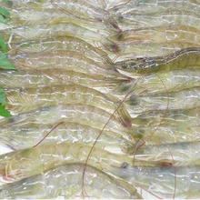 对虾养殖管理对虾养殖怎么样图片