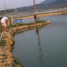对虾养殖技术南美白对虾怎么样养殖图片