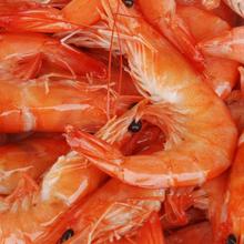 对虾养殖对虾苗种选择图片