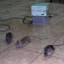 长沙县灭鼠价格优惠