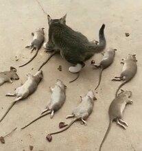 芙蓉区哪里有灭鼠价格优惠