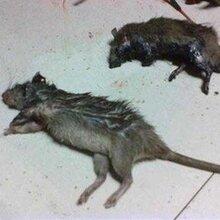 雨花区专业从事灭鼠报价