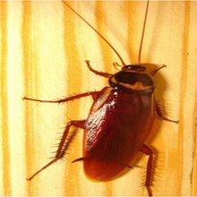 望城区哪里有灭蟑螂哪家比较好