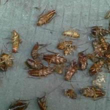 宁乡县专业的灭蟑螂价格优惠