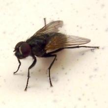 长期灭苍蝇专业消杀