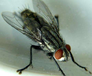 芙蓉区长期灭苍蝇服务
