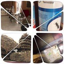 深圳白蚁公司要怎么找?除灭;蟑螂、白蚁、四害、马蜂