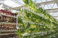 貴州組拼墻體式栽培架、水培植物墻無土栽培