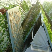 克拉玛依鸟巢温室搭建安装
