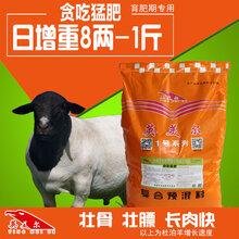 养羊技术与羊病防治羔羊软瘫原因农村养羊图片