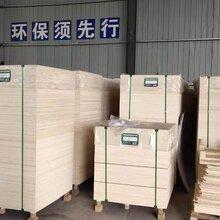 广州椴木胶合板价格