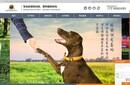 合肥寵物網站建設合肥寵物網站設計制作合肥寵物商城搭建圖片