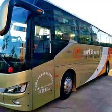 大鹏新区深圳48座旅游大巴租赁租车电话图片