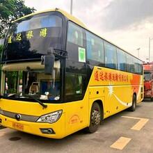 福田知名全新48座市际牌旅游大巴深圳旅游大巴租赁图片