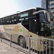 盐山深圳48座旅游大巴租赁出租报价图片