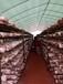進口養殖塑料大棚膜食用菌遮光膜隔熱防曬膜降溫薄膜