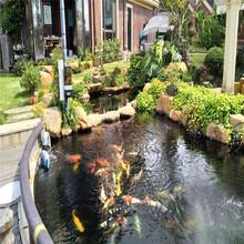 智能錦鯉池魚池過濾系統廠家直銷圖片