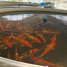 威海錦鯉魚池專用糞便過濾器服務周到圖片