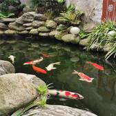 嘉兴锦鲤鱼池专用粪便过滤器安全可靠