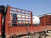 新余燃气锅炉厂家价格定制生产