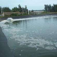 河源土工膜报价图片
