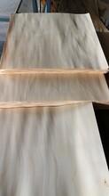 山东桦木面皮批发图片
