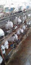 江西兔子养殖基地