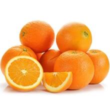 揭阳小水岭油奈苗木脐橙种植价格图片