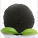 广西腐植酸钠价格实惠
