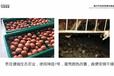 發酵飼料在養殖中的作用,發酵飼料對蛋雞養殖的好處