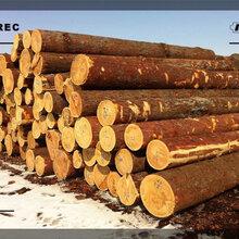 锦州建筑木材生产厂家招全国代理图片