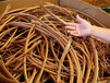 五指山廢銅回收服務