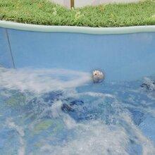 安阳婴儿游泳池厂家直销钢化玻璃婴儿游泳池图片