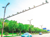 交通信號燈批發價格
