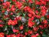龙岗区时花盆栽种植基地