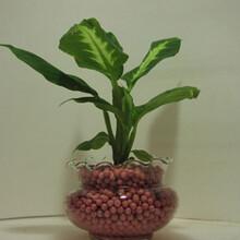 南充花卉陶粒供应商图片