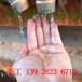 洗砂泥漿處理設備_水洗沙污泥脫水機_洗沙泥漿壓干設備廠家