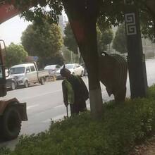 三山區輪挖機出租圖片