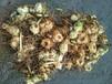 農之福黃精種植,老虎姜苗圃
