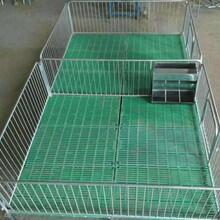 山東萬盟限位欄,保育床,母豬產床圖片
