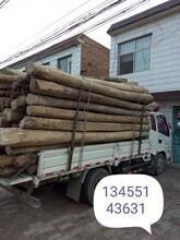 濰坊長期回收老榆木梁板材圖片