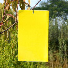 供应进口胶水双面粘虫黄板、PVC塑料捕虫黄板、粘虫板、诱虫板图片