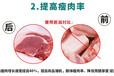 陕西养猪户选用饲料添加剂促长!