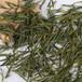 高山茶雨前一級2020安吉白茶品種精美禮盒裝春茶上市
