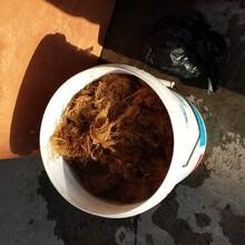 海藻糖高剪切均质机,浒苔渣磨浆机,海苔渣湿法粉碎机图片